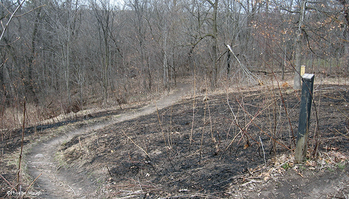 Back Path after burn