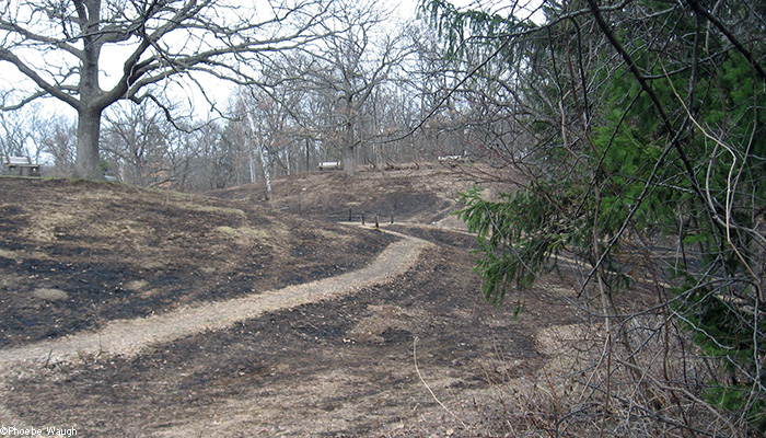 Center hill after burn
