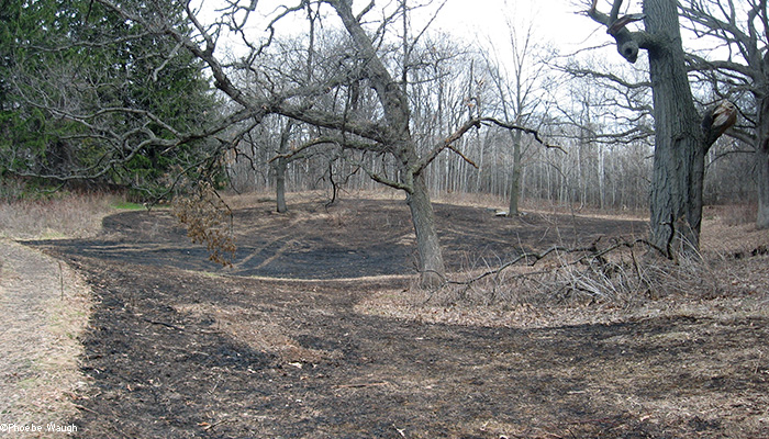 East upland after burn