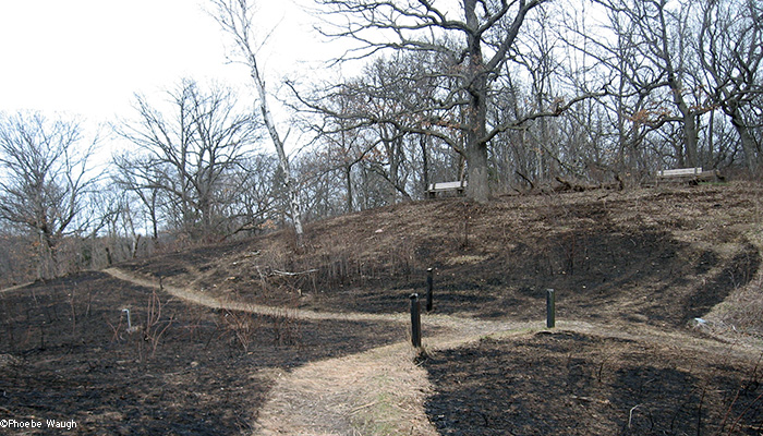 Far back hill after burn