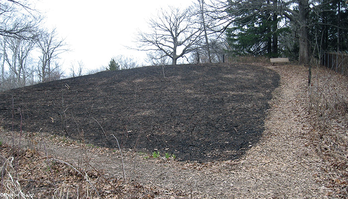First hill after burn