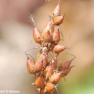 Seed Capsules