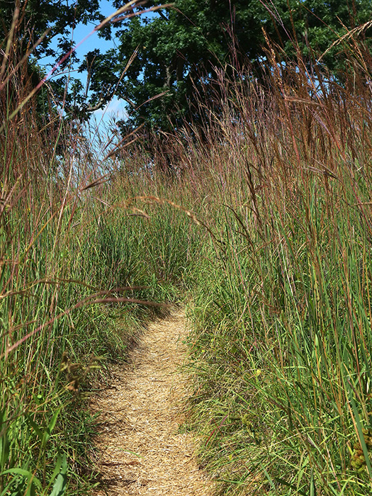 Indiangrass and big Bluestem