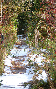 Bog Path with snow