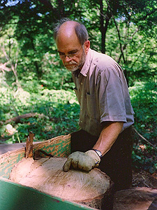 Cary with Oak cutting
