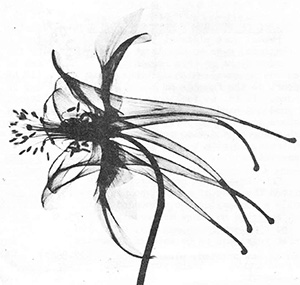 X-ray flower image