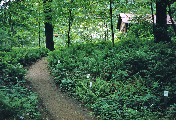 East Woodland Path