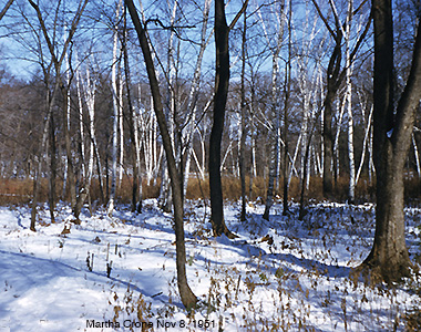 Marsh in winter.