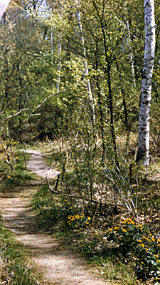 Marsh path in the spring